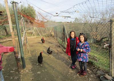 Hens on the Farm